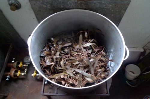 eucalypt soup ;-)