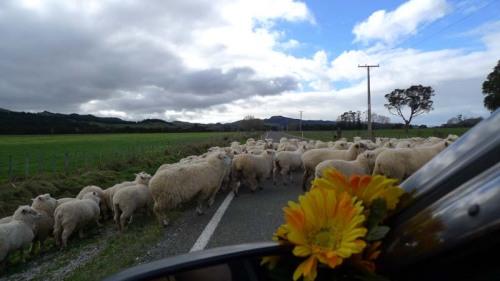 sheepsheep
